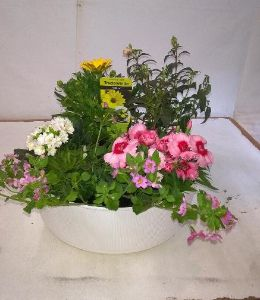 Mothers Day Planted Bowl House plants / Garden Plants